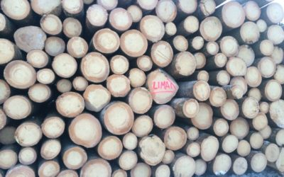 Exploitation de bois et gestion de coupe