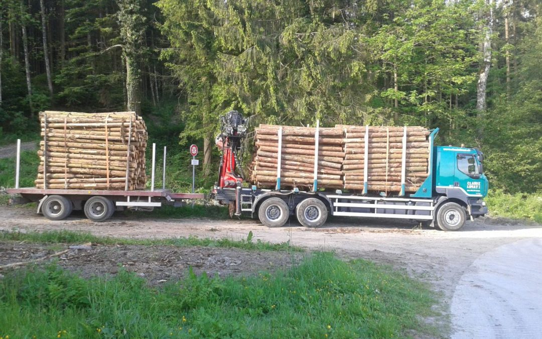 Commerce du bois et de ses dérivés